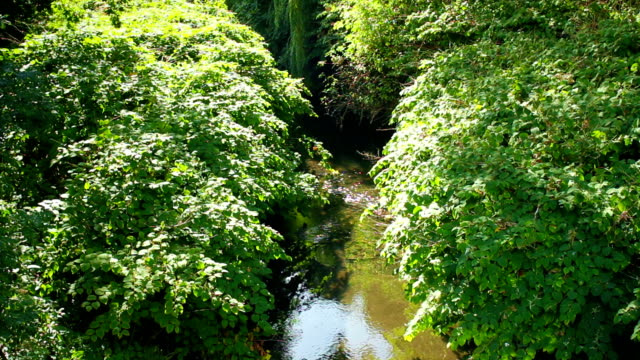 Creek in forest. Lock down shot
