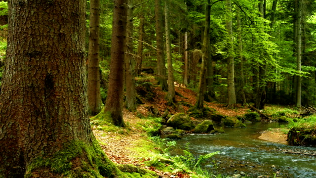 Creek In Green Forest PAN (4K/UHD to HD)