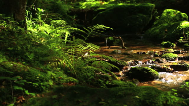 hd creek in green forest panning shot - flowing stream stock videos & royalty-free footage