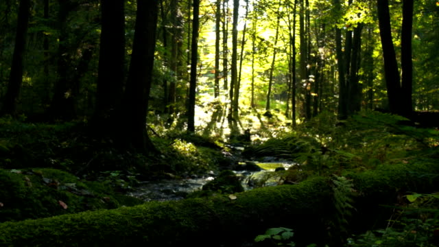 HD Creek in green forest tracking shot