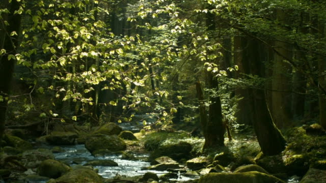 Creek In Spring Forest Cinemagraph