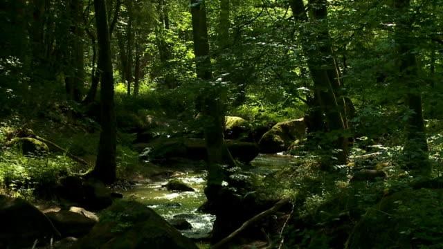 Arroyo en primavera bosque Cinemagraph