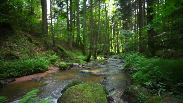 vídeos de stock, filmes e b-roll de creek na spring forest câmera em movimento - floresta da bavária