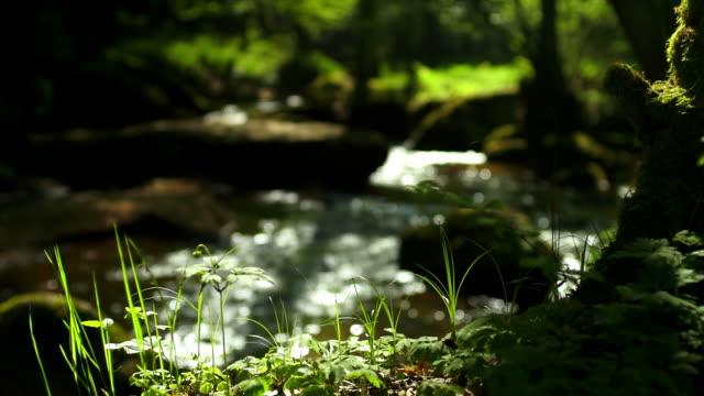 Creek im Frühjahr Wald Kamerafahrt mit Dolly