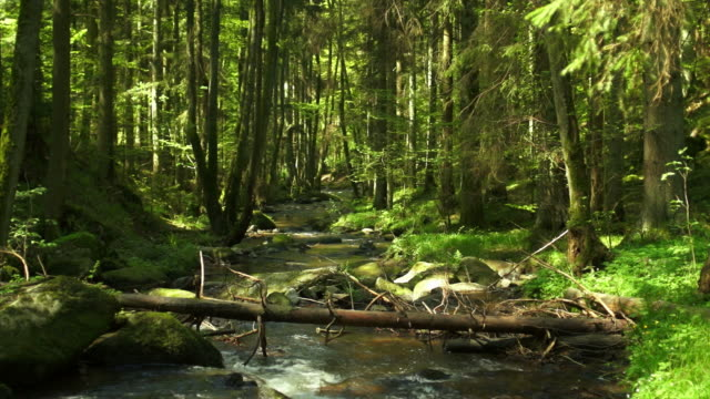 HD Creek im Frühjahr Wald Kamerafahrt mit Dolly
