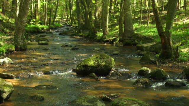 DOLLY Creek nella foresta di primavera
