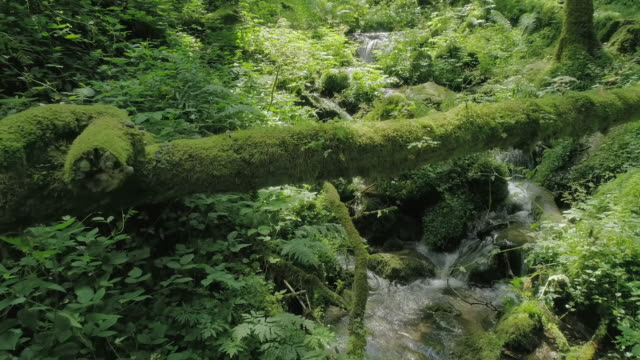 creek in summer forest - idyllic video stock e b–roll
