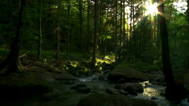 creek in sunny spring forest cinemagraph - forest stock videos & royalty-free footage