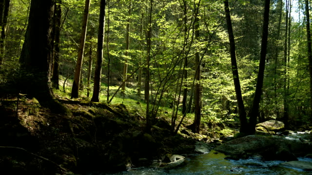 PAN Creek in Sunny Spring Forest (4K/UHD to HD)