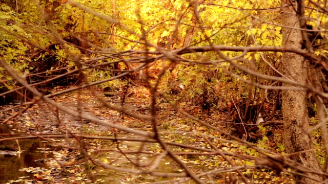 creek in the fall - small group of objects stock videos & royalty-free footage