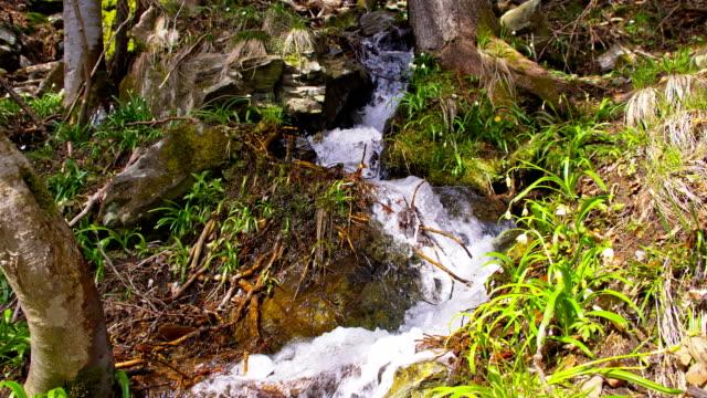 vidéos et rushes de ds creek dans la forêt. - mousse végétale