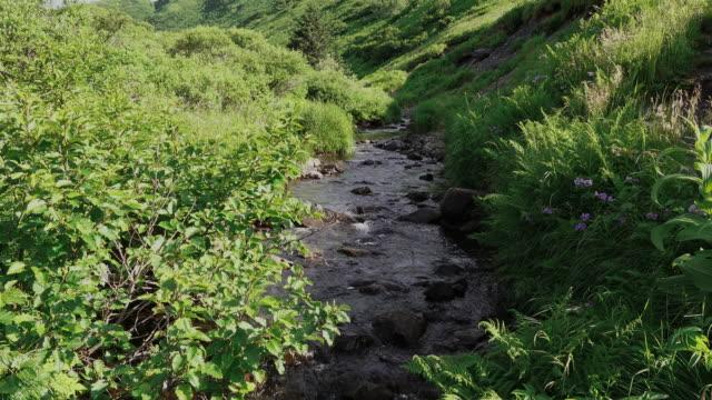 Creek, Kodiak, Alaska