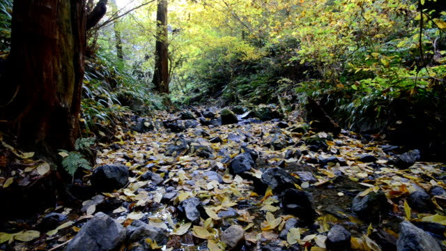 creek runs through mt. takao. - stream flowing water stock videos and b-roll footage