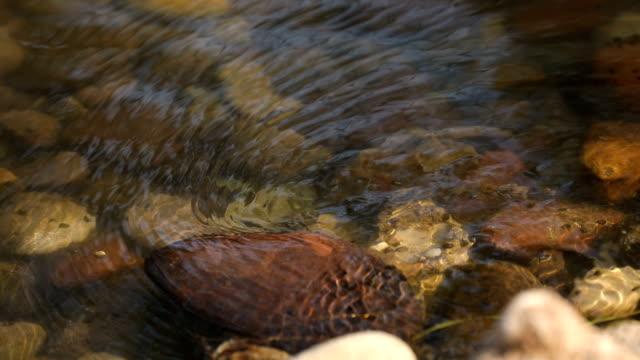 クリークの水 - にじみ出す点の映像素材/bロール