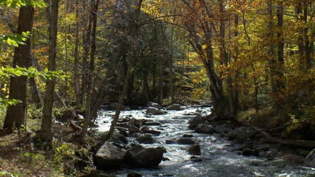 vídeos de stock, filmes e b-roll de creek with back lit trees - vermont