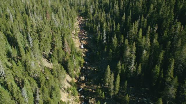 creeks winds through forest in wilderness area - wildnis stock-videos und b-roll-filmmaterial