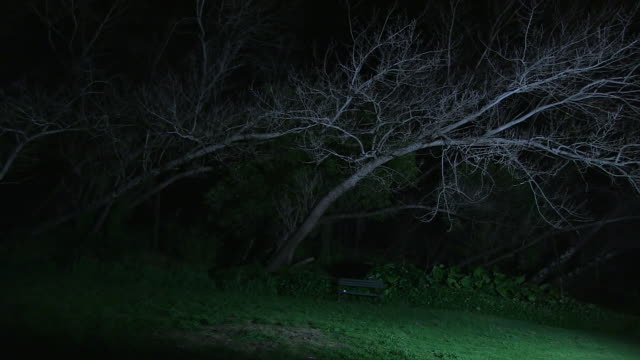 a creepy  bench under a leafless tree - woodland stock videos & royalty-free footage