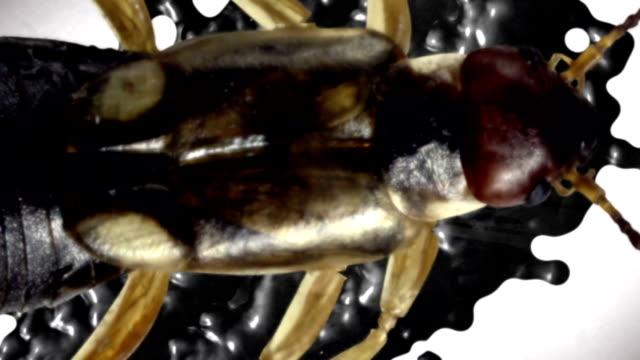 Gruselig Käfer
