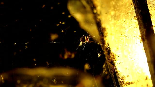 Gruselig Straße Laterne mit Spinnen-Nahaufnahme