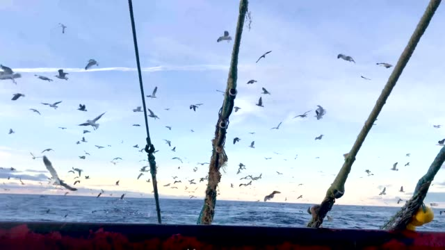 crew members of the radiant star fishing in the north sea on december 5 2018 in shetland scotland the uk fishing industry has been a vocal... - netting stock videos & royalty-free footage