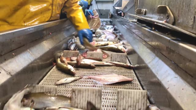 vidéos et rushes de crew members of the radiant star fishing in the north sea on december 5 2018 in shetland scotland the uk fishing industry has been a vocal... - chalutier