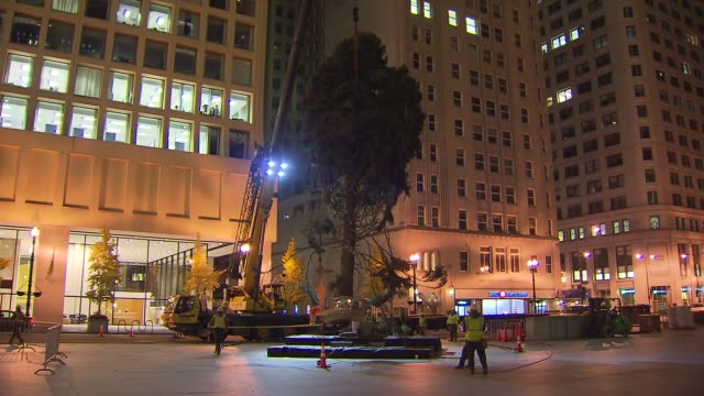 crews set up a colorado spruce for the 100th tree lighting ceremony in daley plaza crews hoist christmas tree off truck at daley plaza on november 08... - christmas tree lighting ceremony stock videos & royalty-free footage