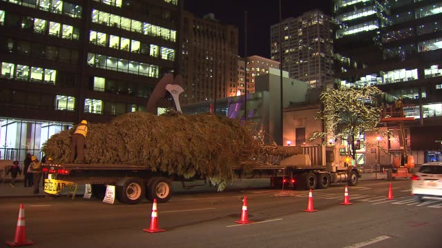 crews set up a colorado spruce for the 100th tree lighting ceremony in daley plaza christmas tree on flatbed truck at daley plaza on november 08 2013... - christmas tree lighting ceremony stock videos & royalty-free footage