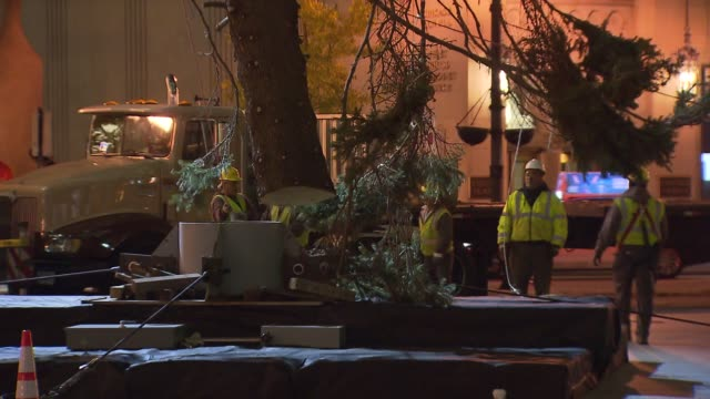 crews set up a colorado spruce for the 100th tree lighting ceremony in daley plaza workers put christmas tree in place at daley plaza on november 08... - christmas tree lighting ceremony stock videos & royalty-free footage