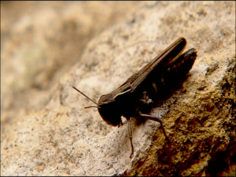 cricket, andalusia, southern spain - cricket insect stock videos and b-roll footage