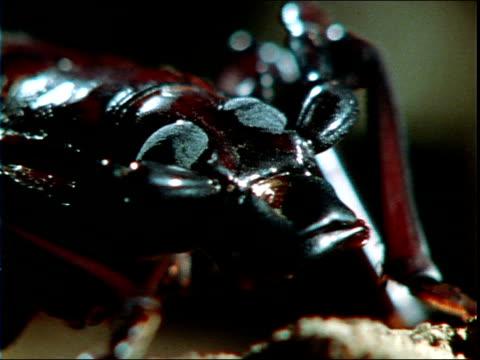 stockvideo's en b-roll-footage met a cricket moves slowly. - voelspriet