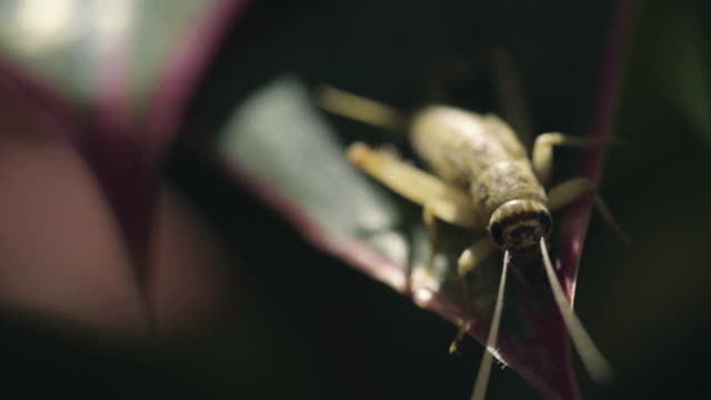 crickets - cricket insect stock videos and b-roll footage