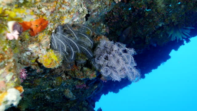 crinoids on a rock wall - modern rock stock videos & royalty-free footage