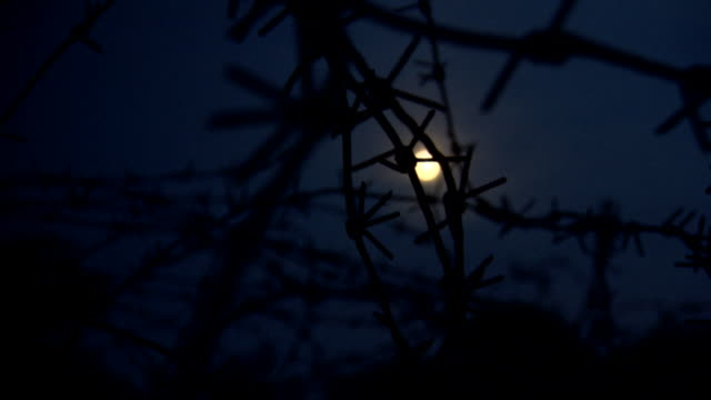 criss-crossed barbed wire obscures a handheld pov view of the moon from a trench, france. - trench stock videos and b-roll footage
