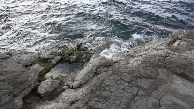 vídeos de stock, filmes e b-roll de croatia rocky tide pool at low tide - vazante