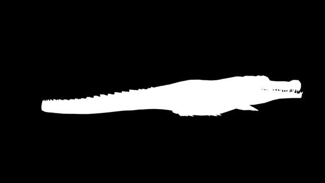 vídeos y material grabado en eventos de stock de ataque de cocodrilo (en bucle) - pata com garras