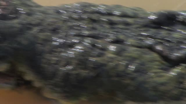 crocodile close up, northern territory, australia - one animal stock videos & royalty-free footage