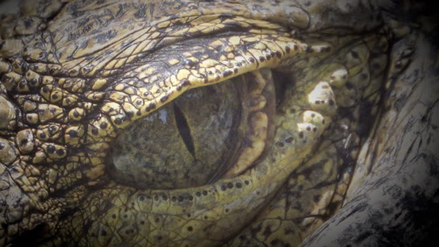 4k: crocodile closes and opens the eyes - animal eye stock videos & royalty-free footage