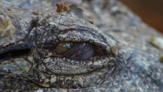 crocodile eye close-up - one animal stock videos & royalty-free footage