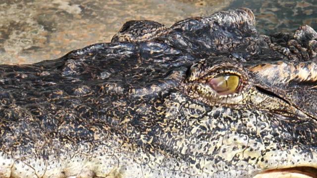 Crocodile eyes will blink or close the eyes