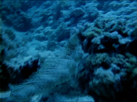 a crocodile fish swims along the ocean floor. - red sea stock videos & royalty-free footage