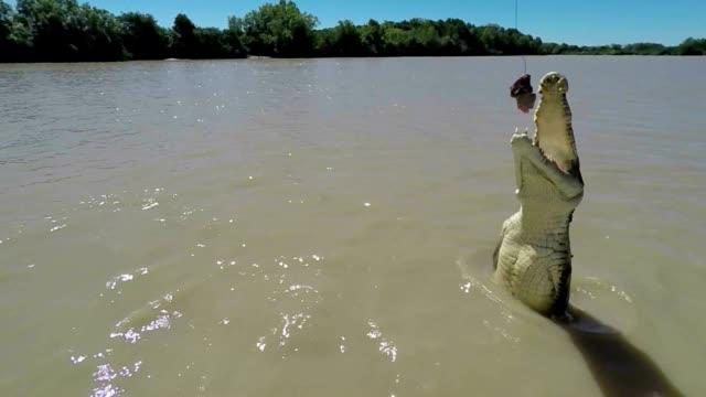 Crocodile jumps out of river, Australia - Slow motion