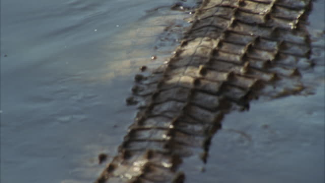 MS Crocodile moving water/ Unspecified