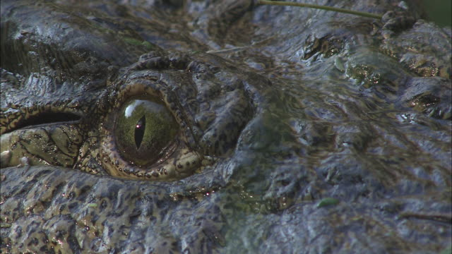 a crocodile stares. - mystery stock videos & royalty-free footage