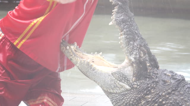 crocodile - play fight stock videos and b-roll footage