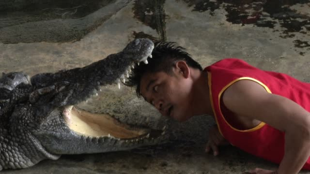 vidéos et rushes de crocodile wrestlers perform stunts during a show at the samphran elephant ground & zoo in bangkok. - danger