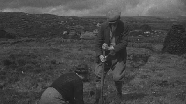 1944 crofter gathering load of peat by cutting it with flat spade and spreading it out on bank to ldry in sun so it may burn as fuel / achriesgill, sutherlandshire, scotland - achriesgill stock videos and b-roll footage