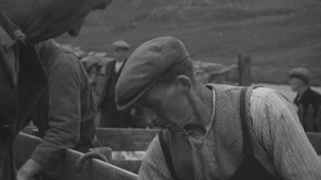 1944 montage crofters herding sheep into farm pen using calls and huts / achriesgill, scotland, united kingdom - achriesgill stock videos & royalty-free footage