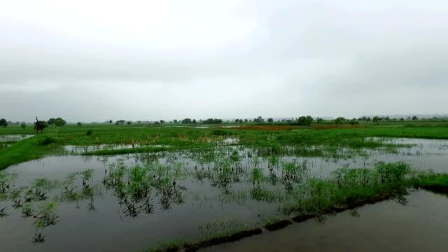 Ernte bei Hochwasser