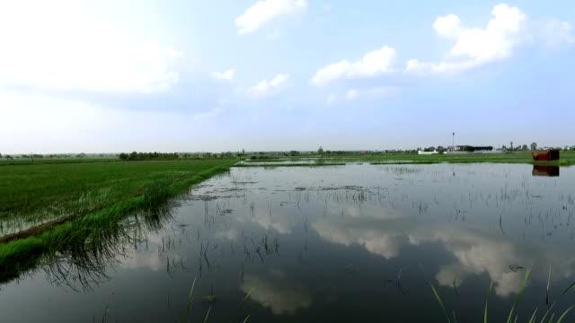 crop during flood - torrential rain stock videos & royalty-free footage