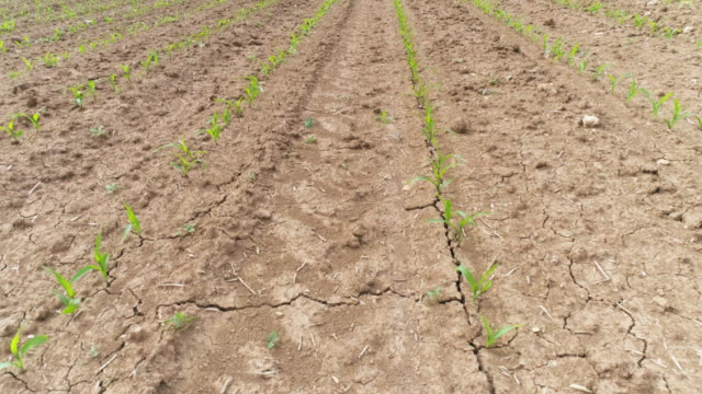 crop field in spring flyover - drought stock videos and b-roll footage